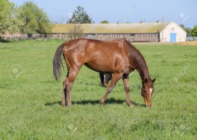 Horse farm in Trakai, Lithuania